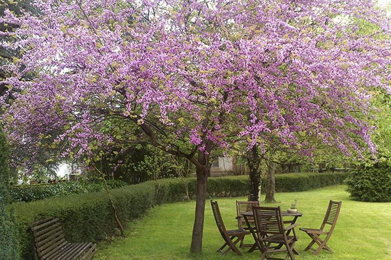 Jard n de carrejo hotel con encanto en cantabria - Jardin de carrejo ...